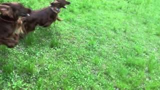 ヴィッツとライアンは再会して大興奮!緑の草原を爆走です!見ていて気...