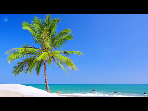 🌊 Paradise Beach On Tropical Island ☀ Beach View & Ocean  Ambience For Relaxation And Sleeping