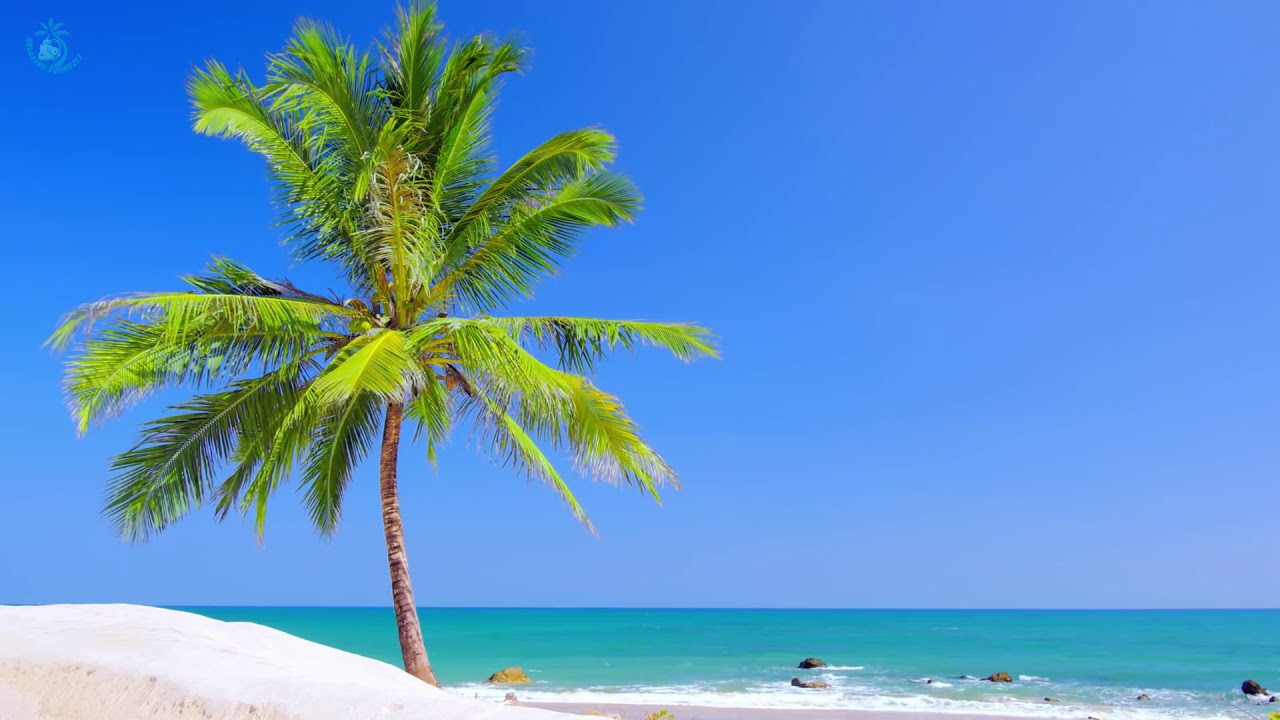 Tropical Island Beach Ambience Sound: Paradise Beach On Tropical Island ☀ Beach View & Ocean