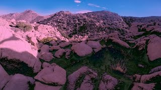 Aliens and Psychedelics - The Joshua Tree Experience