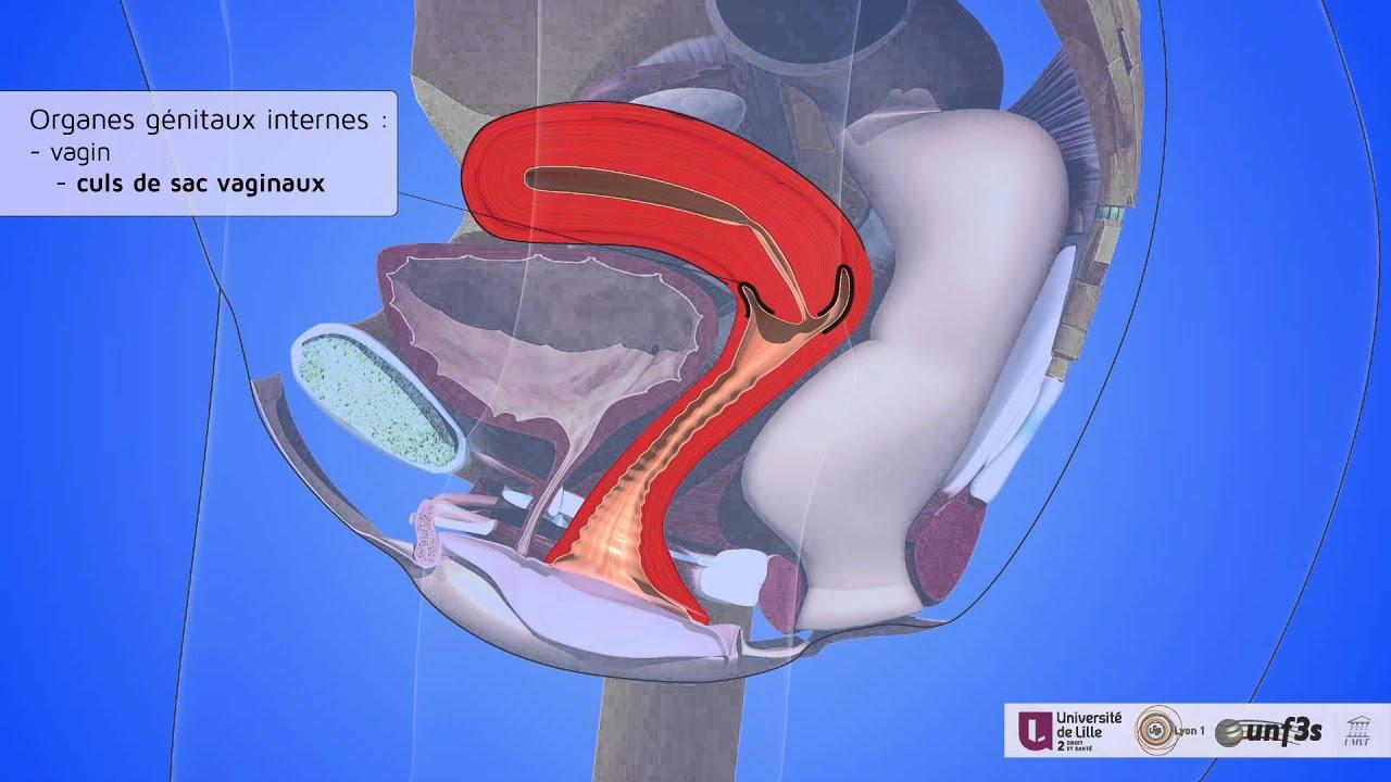 Anatomy of a female