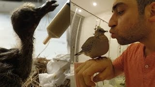 10 Reasons Why You Should Save a Baby Bird | Roei Kashi and Jib the Dove