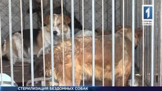Стерилизация бездомных собак