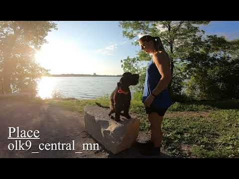 "Portuguese Water Dog ""Wes"" 