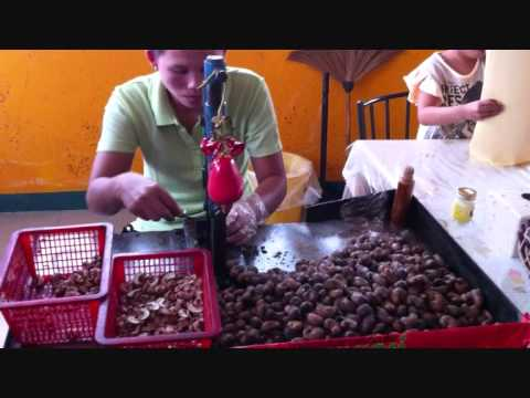 Thailand Removing Shells From Cashew Nuts Youtube