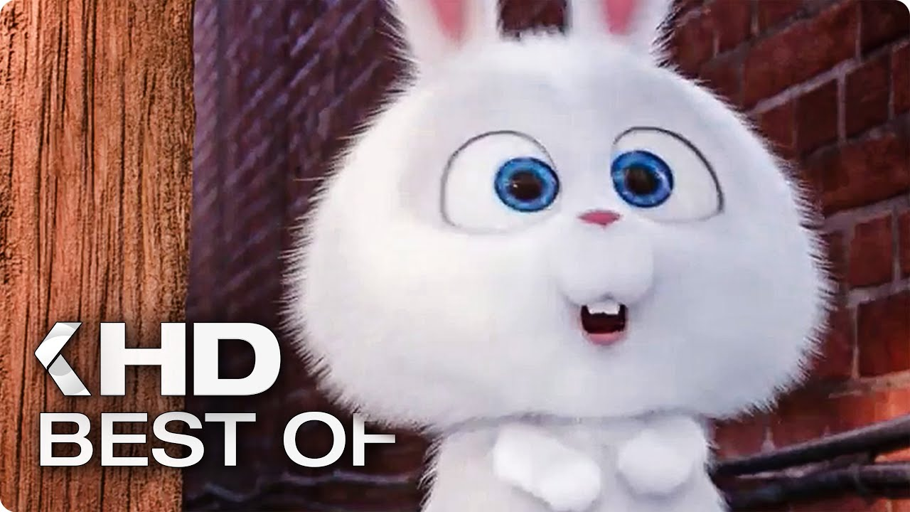 best of snowball 2016 the secret life of pets   youtube