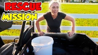 RESCUE MISSION! SAVING OUR NEW PETS! THEY COULD HAVE DIED! | NICOLE SKYES Poster
