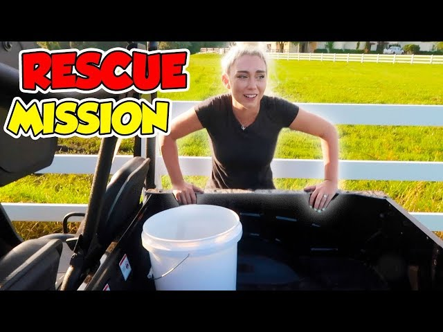 RESCUE MISSION! SAVING OUR NEW PETS! THEY COULD HAVE DIED!