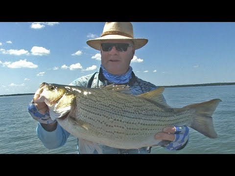 FOX Sports Outdoors SouthWEST #23 - 2017 Richland Chambers Lake Texas Hybrid Stripers