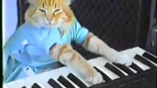 Cat playing piano!!! Funny!!