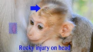 Heartbreaking Baby Rocky Got Injury On His Head And Mama Rozy Got Injury On Her Leg So Hurt