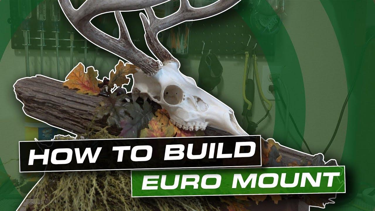 How To Make An Easy European Skull Mount Diy Display