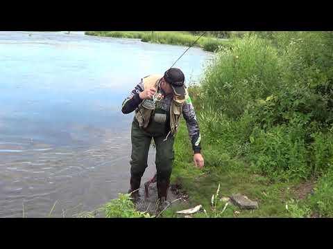 Рыбалка. Голавль на спиннинг. Голавлиная река Красивая Меча. Июль 2019. Природа и рыбалка. Норстрим.