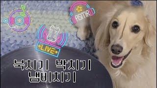 SHORT) 리듬타는 강아지 / 고양이 같은 닥스훈트 …