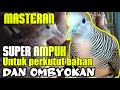 Suara Perkutut Lokal Untuk Pancingan Perkutut Bahan Dan Ombyokan  Mp3 - Mp4 Download