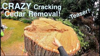 CRAZY Cracking Cedar Removal Teaser!