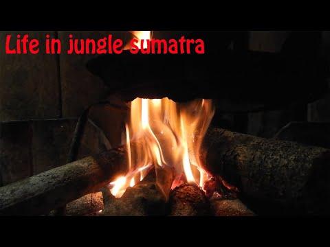 Traditional life in the jungle of Sumatra [INDONESIA]// menangkap ikan dengan cara tradisional