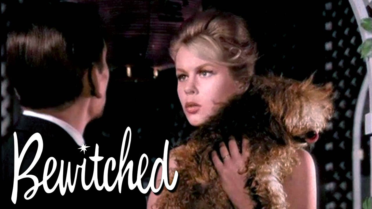 Samantha Turns A Man Into A Dog | Bewitched