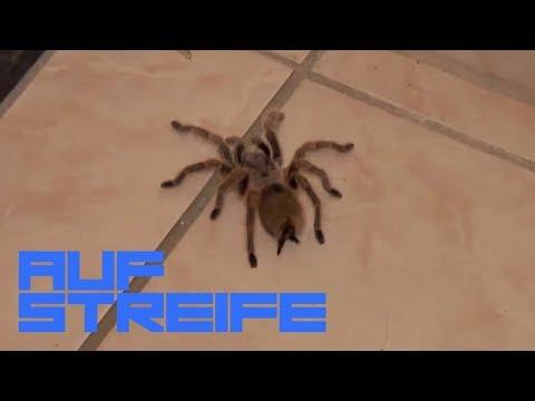 Skorpion mann flirtet fremd