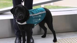 ISDA Dog Training Program - Adavanced Skills: Level 3
