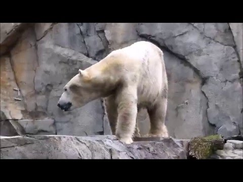 My day at the Brookfield Zoo