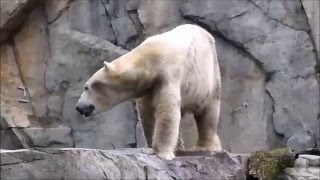 A day at the Brookfield Zoo
