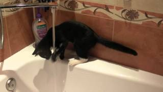 Коты боятся воды?