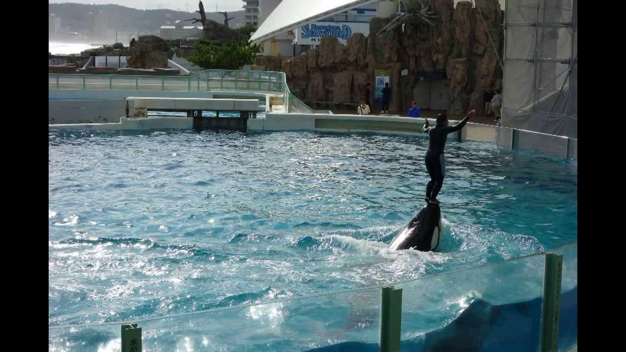 Orca Show, Kamogawa Sea World, Japan, October 22, 2013 - YouTube