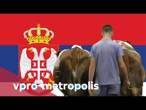 Irreplaceable help in Serbia - vpro Metropolis