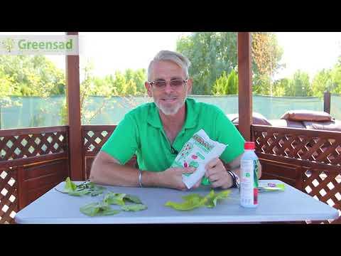 Сервисное обслуживание комнатных растений в Москве Уход