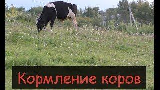Рацион и кормление наших молочных коров/Сколько дают наши коровы молока/