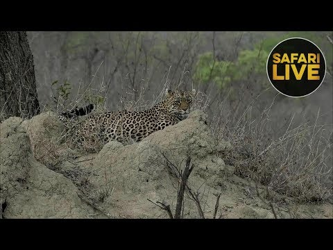 SafariLIVE - Sunrise Safari - October 22, 2018