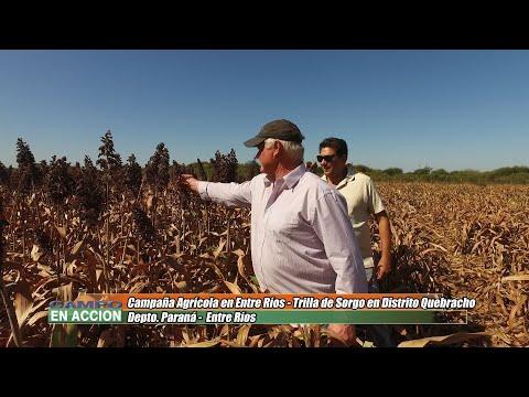 Adolfo Weber - Productor Agropecuario - El sorgo le rindió entre 5 y 6 toneladas por hectárea
