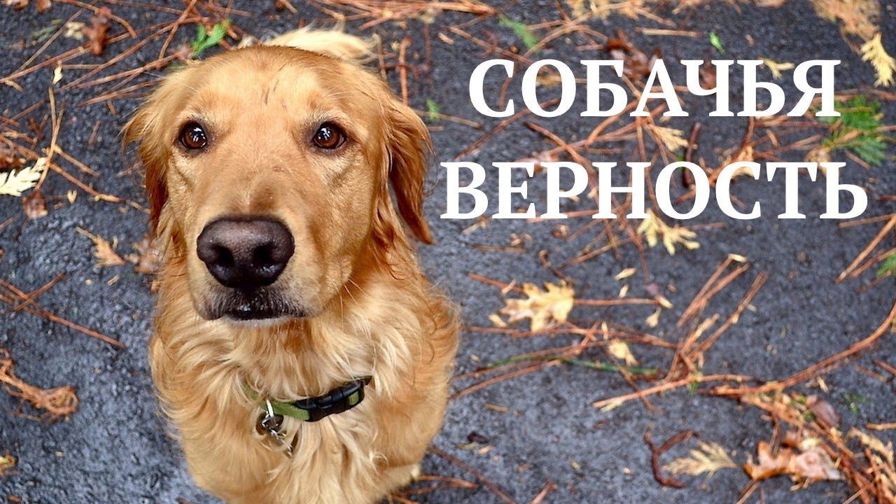 Картинки спасибо собаки