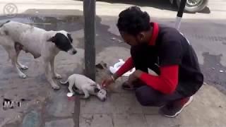 видео жесть Собака мать просит помощи человека спасите щенка