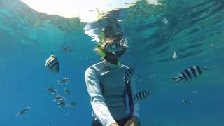 Snorkeling with Sharks, Kuata Island, Yasawas