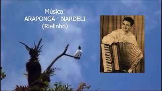 Download lagu Araponga -  Nardeli - original