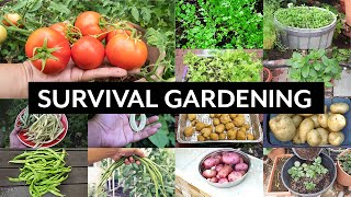 Survival Gardening - Top 5 Vegetables to grow in your garden in an apocalypse or crisis