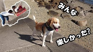 ビーグル #うぃるさん #Beagle 数週間前にに海へ行ってきた時のです ...