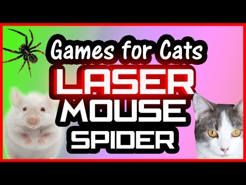 Cat Games on Screen: Laser, Mouse and Spider ! Video for Cats