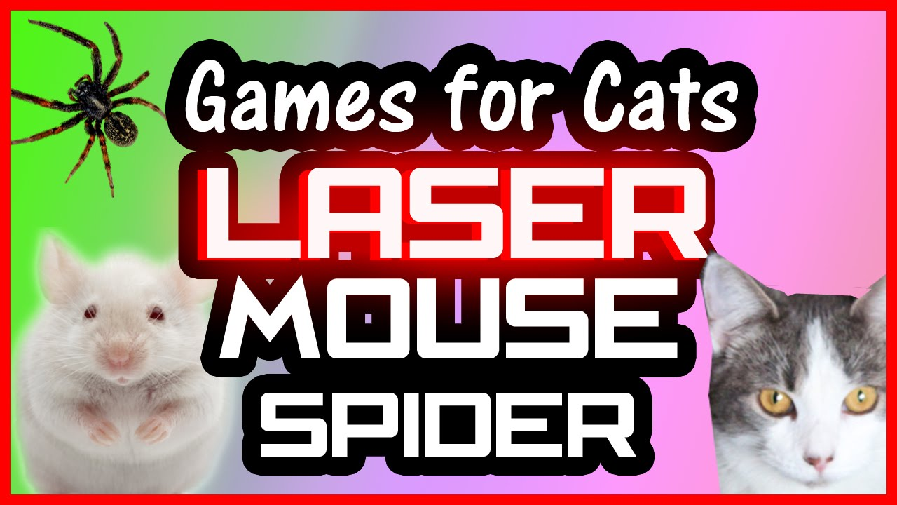 Cat Games On Screen Laser Mouse And Spider Video For