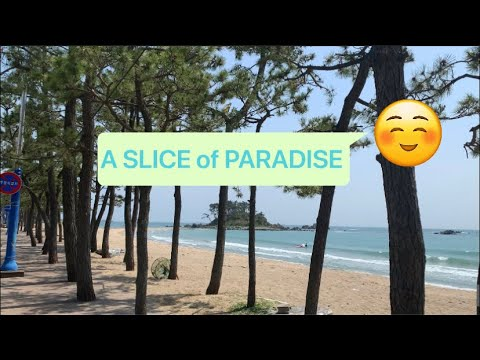A SLICE OF PARADISE IN ULSAN KOREA | JINHA BEACH