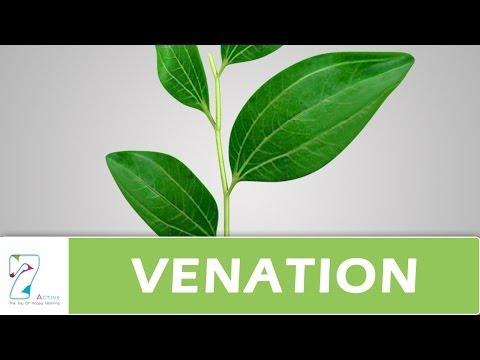 Venation Of Leaf Youtube