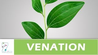 Venation of leaf