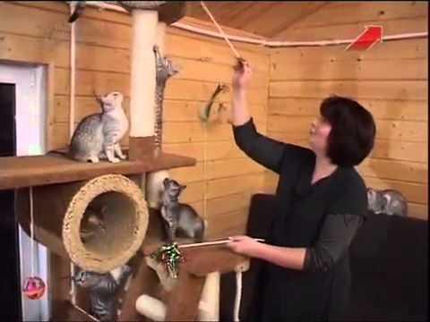 Породы кошек с фотографиями, названиями Кошки фото