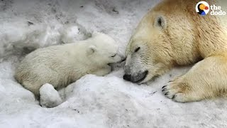 BEST Animal Moms Give Babies Courage | The Dodo