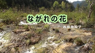 ながれの花 川【九寨溝】 西田佐知子.