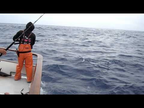 American Angler Tuna Carnage