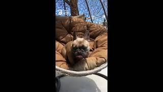 Bevill Dog Behavior - Flynn at the Dog Psychology Center