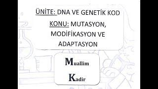 8. Sınıf Fen Bilimleri Mutasyon, Modifikasyon ve Adaptasyon